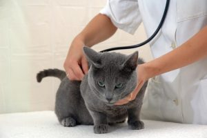 Gato control veterinario hospitalet
