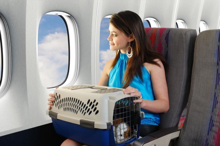 avion viajar con vuestra mascota veterinario hospitalet