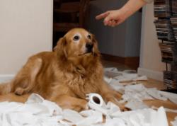 castigo perro veterinario hospitalet