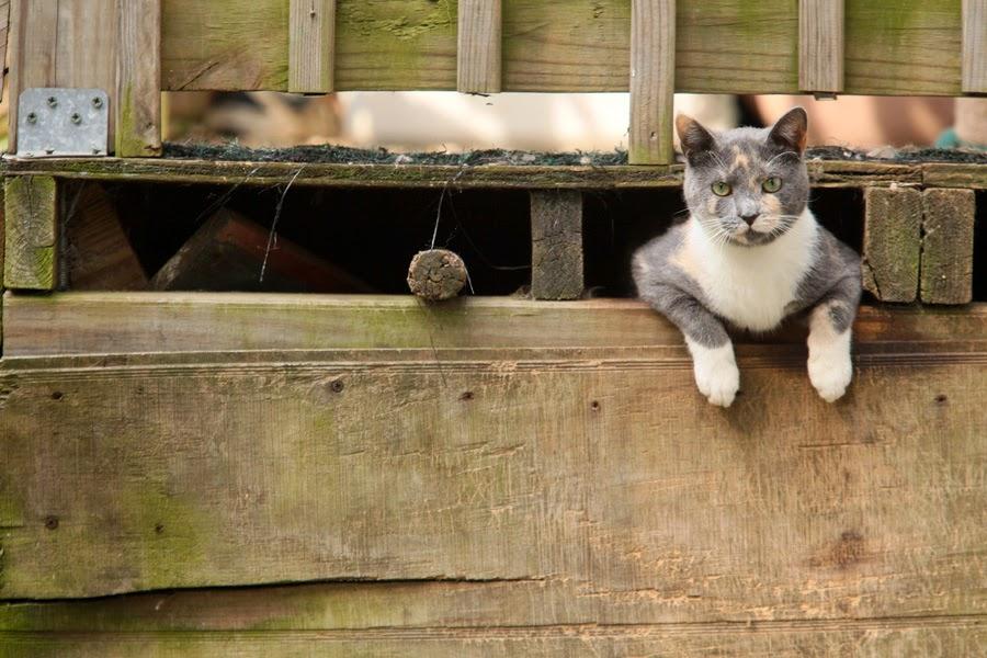 colonias felinas veterinario hospitalet