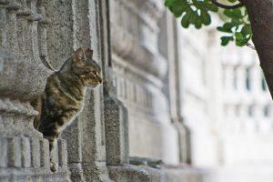 colonias urbanas felinas veterinario hospitalet