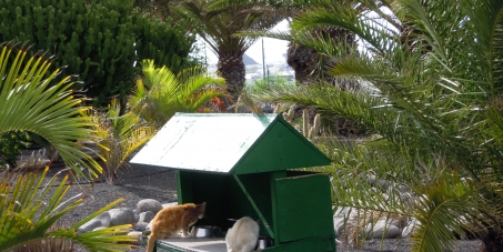 colonias urbanas veterinario hospitalet