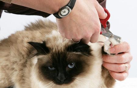 corte uñas gato veterinario hospitalet