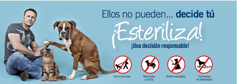 esterilizacion-veterinario-hospitalet