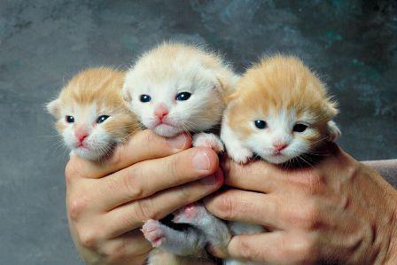 gatito huerfano veterinario hospitalet