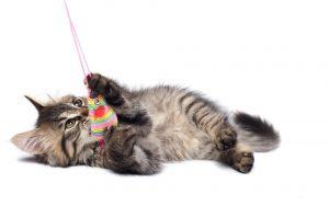 gato juego veterinario hospitalet