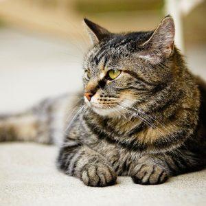 gato senior veterinario hospitalet