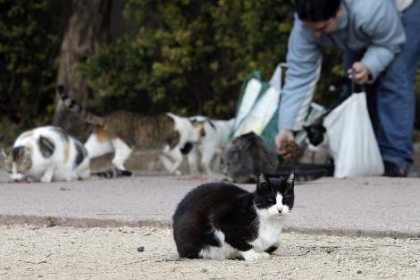 higiene colonias felinas veterinario hospitalet