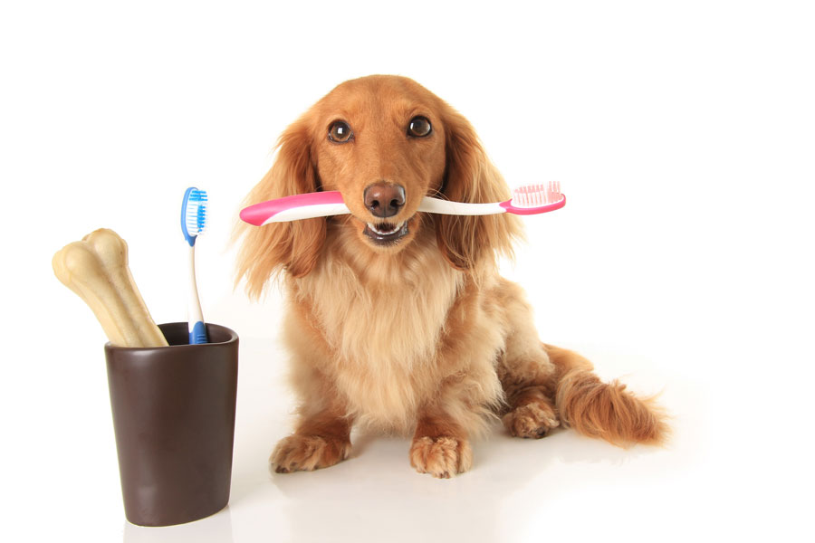 higiene dental veterinario hospitalet