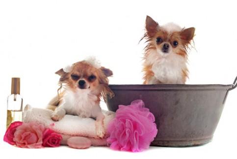 higiene veterinario hospitalet
