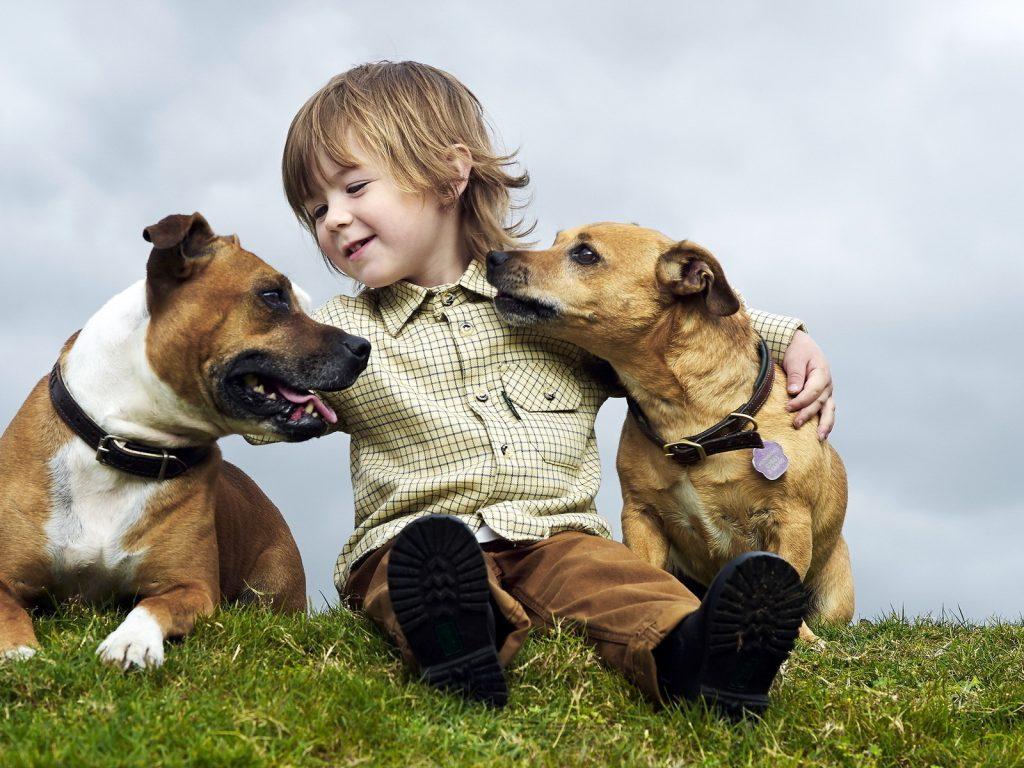 niño-perro-socializacion-veterinario-hospitalet