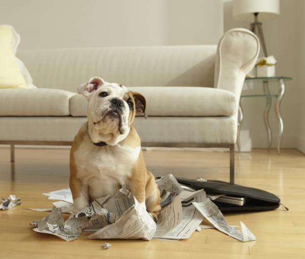 perro destroza veterinario hospitalet
