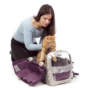 transportin gato veterinario hospitalet