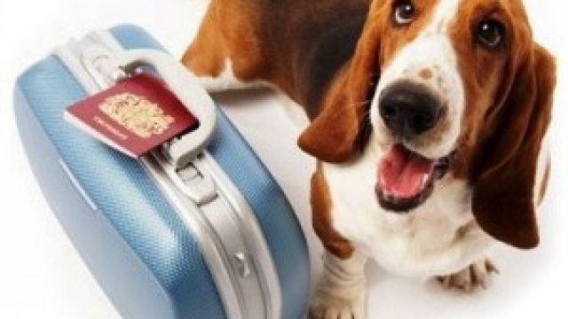Viajar con vuestra mascota