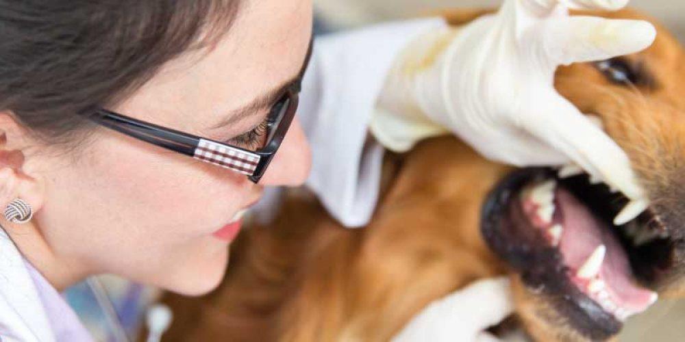 La higiene bucal, clave para la salud de tu mascota