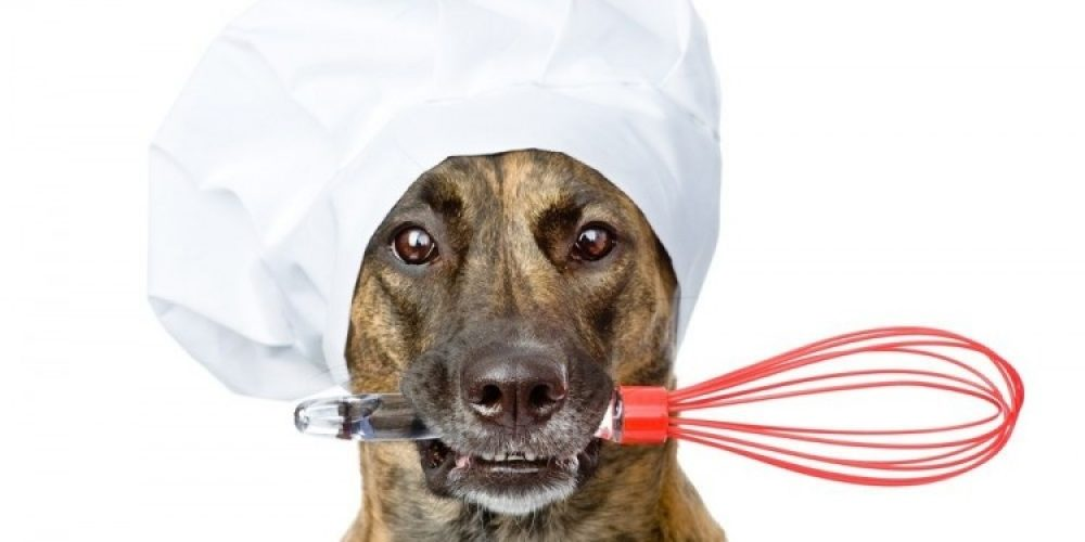 ¿Alimentamos correctamente a nuestras mascotas?