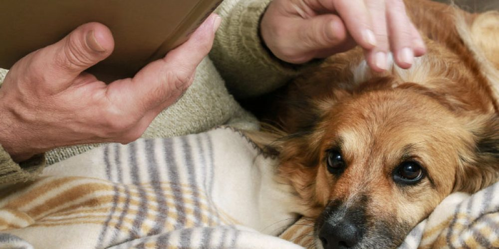La edad geriátrica en nuestras mascotas