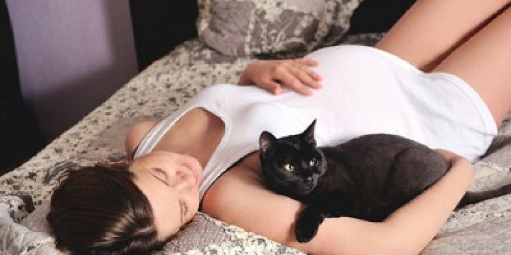 Toxoplasmosis, gatos y embarazadas