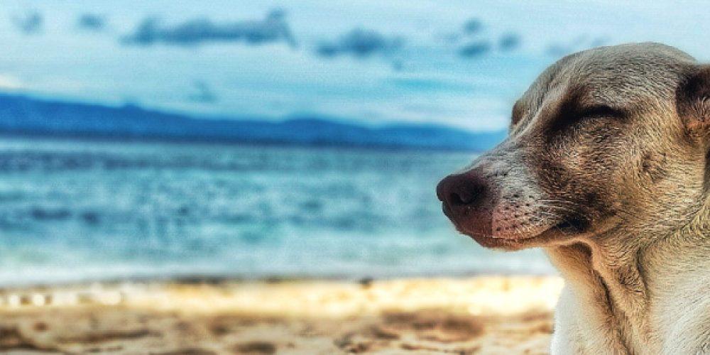 Cuida de tu mascota para pasar un feliz verano