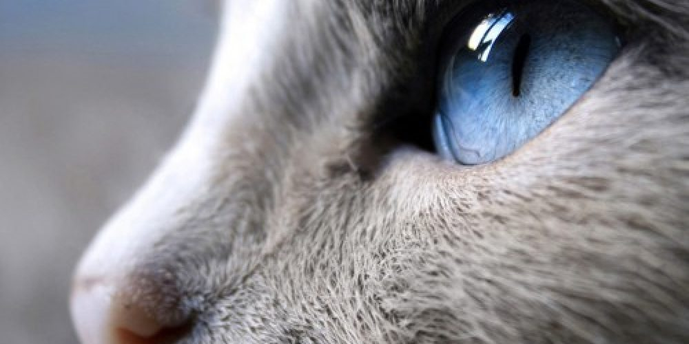La visión de nuestros animales